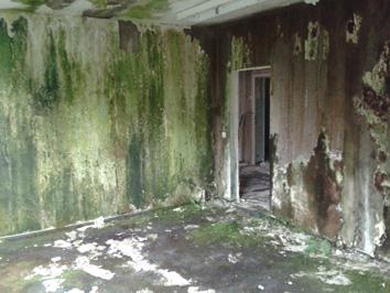 Nasse Wände Erkennen Und Ursachen Finden